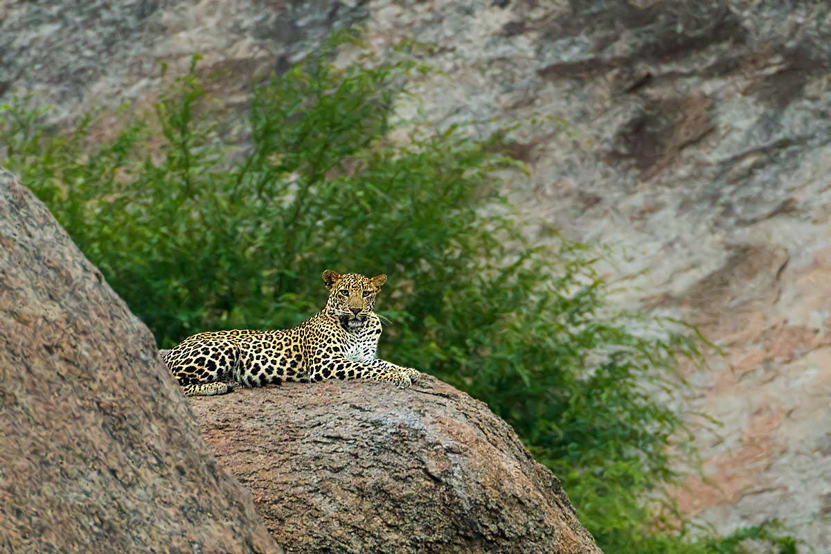 Godwad Leopard Safari Camp, Bera