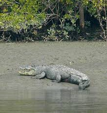 Sunderbans Cruises